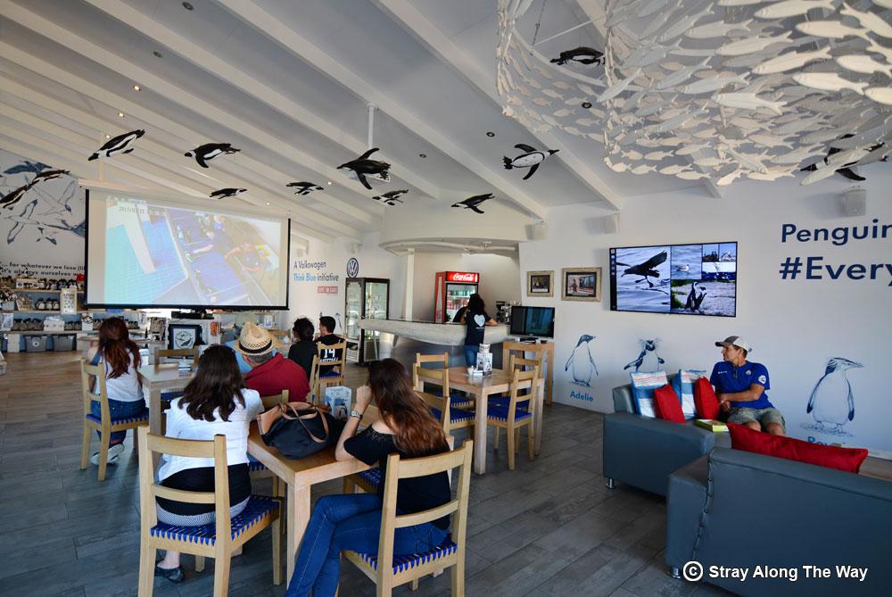 Volunteering at Marine Dynamics with GAPAfrica