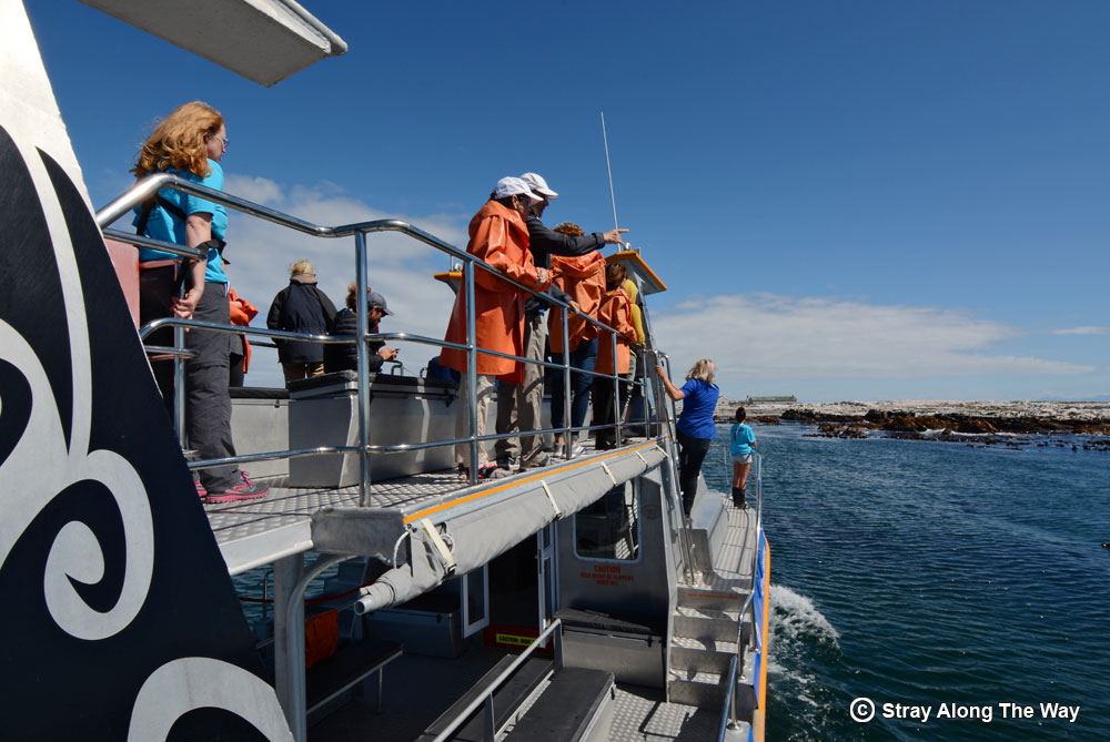 Learning more about the Marine Big 5 in Gansbaai